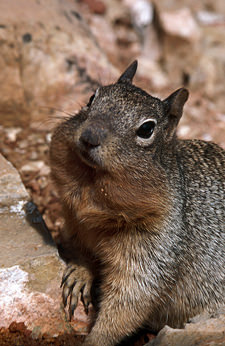 Thumbnail image ofSquirrel with food crumbs on fur.