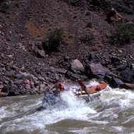 A raft entering Hermit Rapid.