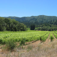 The Jack London vineyard (now used by Kenwood Winery) in Jack London State Park, California.