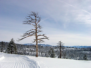Thumbnail image ofThe view from a ski hut on the Bear Valley Cross...