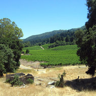 A view of the Jack London vineyard from near the 'Pig Palace', Jack London State Park.