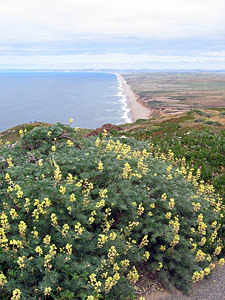 Thumbnail image ofA view of the mile-long beach at Point Reyes.