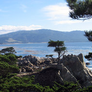 The famous lone Cypress on the California coast along the 17-mile Drive between Monterey and Carmel.