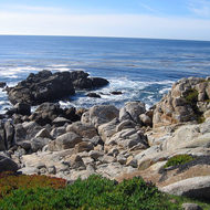 The California coast along the 17-mile drive between Monterey and Carmel.