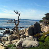 A dead cypress tree on the 17-mile drive between Monterey and Carmel.