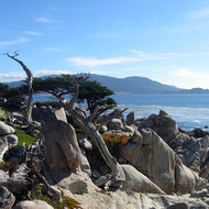 Dead cypress trees on the 17-mile drive between Monterey and Carmel.