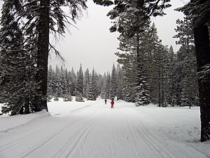 Thumbnail image ofSkiers at the Mt. Shasta Cross Country Ski Center.