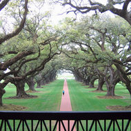 A view down Oak Alley from the mansion at Oak Alley Plantation (near New Orleans).