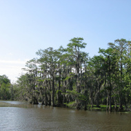 A swamp near Houma (outside New Orleans).