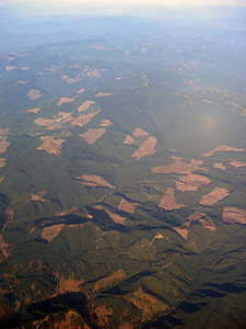 Thumbnail image ofAn aerial view of clearcut logging in Oregon,...