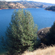 Don Pedro Reservoir on the Tuolumne River near Sonora, CA.