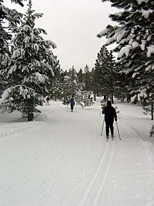 Thumbnail image ofCross-country skiing at the Tahoe-Donner Cross-Country...