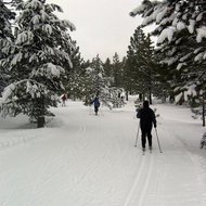 Cross-country skiing at the Tahoe-Donner Cross-Country ski area north of Lake Tahoe.