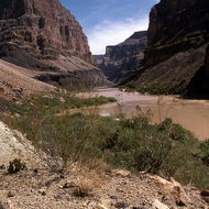 A Colorado River scene.