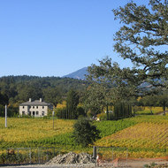 Napa Valley vineyards in Fall, near Calistoga.