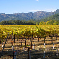 Napa Valley vineyards looking North near Calistoga.