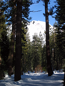 Thumbnail image of Cross-country skiers on Mt. Shasta (December 2006).