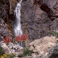 A waterfall near the Colorado River in the Grand Canyon, with Indian Paintbrush in the foreground.