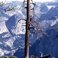 Looking to Vernal Falls (lower left) and Nevada Falls (through the tree branches in the middle) from Glacier Point.