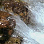 Close-up of a stream in the Grand Canyon.