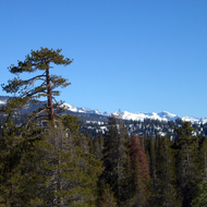 Mountains in winter visible from the Big Meadows road, Giant Sequoia National Monument.