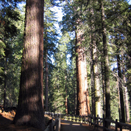 The General Grant Grove trail in Kings Canyon National Park.