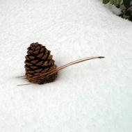 A pine cone and needle in the snow.