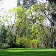 A meadow in Lithia Park, Ashland, Oregon.
