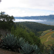 A view of the Sonoma Valley from the Moon Mountain Christmas Tree Farm, with Sonoma Mountain in the distance.