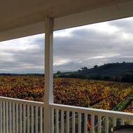 Vineyards in the Fall at the southern end of Napa Valley (Carneros region).