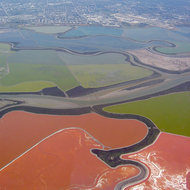 An aerial view of the San Francisco Bay wetlands and salt ponds, as well as Moffett Field.