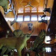The inside of the Banff Park Museum National Historic Site of Canada.