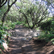 The trail to Twin Falls on Maui, HI, along the Hana Highway.