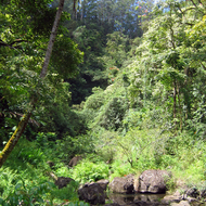 A view of the Maui jungle along the road to Hana.