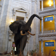 The main entrance hall at the American Museum of Natural History in Washington, DC.