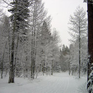 A snowy cross-country trail at Royal Gorge Cross-country Ski Resort, California.
