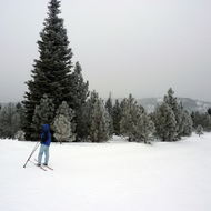 Frosted trees and a skiier at the Tahoe-Donner Cross-Country Ski Center.