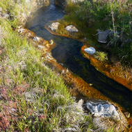The hot springs stream that runs into the East Fork of the Carson River below Markleeville, CA.