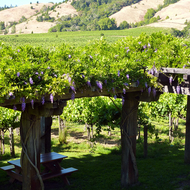 A view of the grounds and vineyards of Navarro Winery in Mendocino County, California.