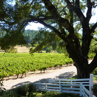 A view of the vineyards of Yorkville Cellars in Mendocino County, California.