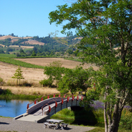 The grounds of the Greenwood Ridge Winery in Mendocino County, California.