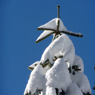 Snow piled on a tree.