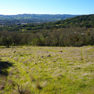 A view of the town of Sonoma and the Sonoma Valley from the Sonoma Overlook Trail in spring.