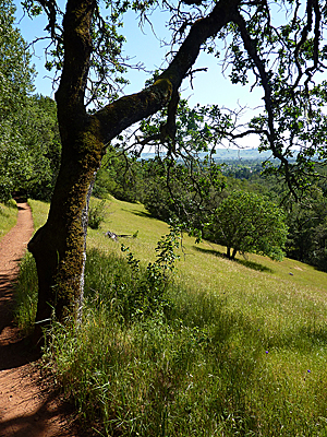 Thumbnail image ofThe Sonoma Overlook Trail on the outskirts of...