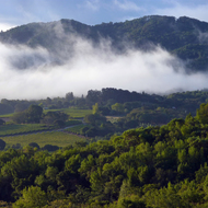 Sonoma Mountain in the misty morning.