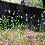 Spring plants in the Sonoma Mountain Cemetery.