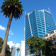A not untypical street scene in Auckland - palm trees and high rises.
