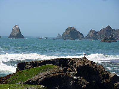 Thumbnail image ofA seagull perched on a rock at Goat Rock Beach,...