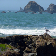 A seagull perched on a rock at Goat Rock Beach, where the Russian River meets the Pacific Ocean in Sonoma County, California.