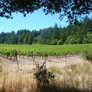 The Jack London vineyard at Jack London State Park in Sonoma Valley.